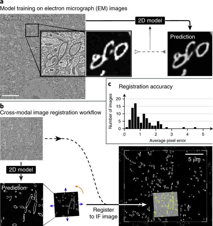 Label-free prediction of three-dimensional fluorescence