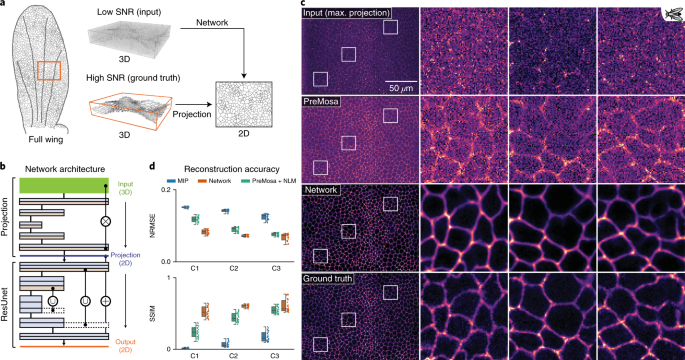 Content-aware image restoration: pushing the limits of fluorescence