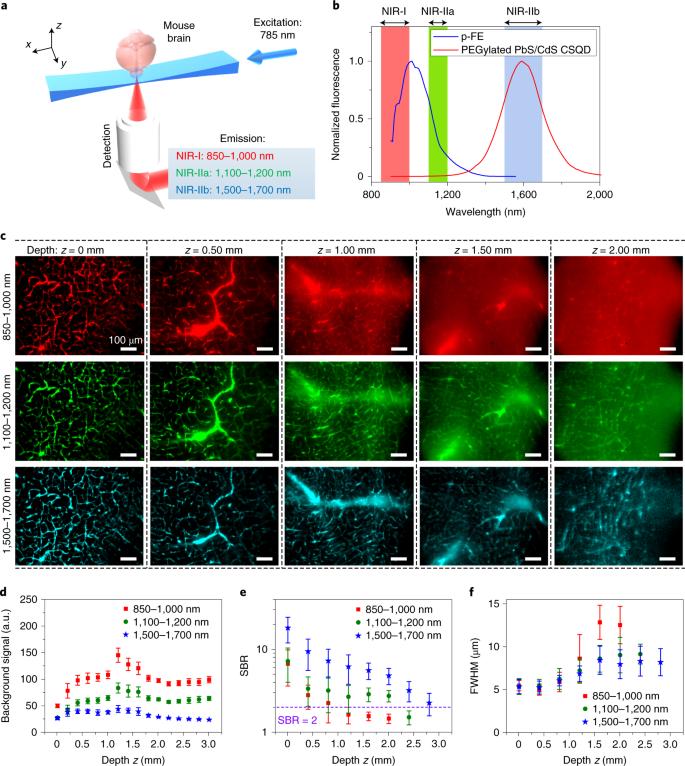 Light-sheet microscopy in the near-infrared II window | Nature Methods