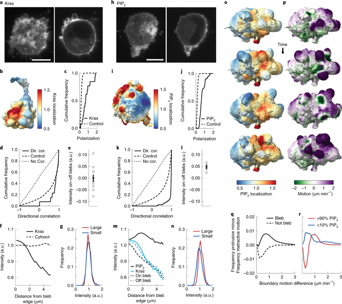 Robust and automated detection of subcellular morphological