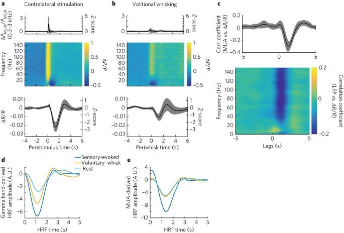 Weak correlations between hemodynamic signals and ongoing neural