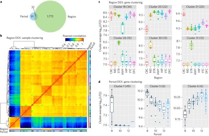 A multiregional proteomic survey of the postnatal human