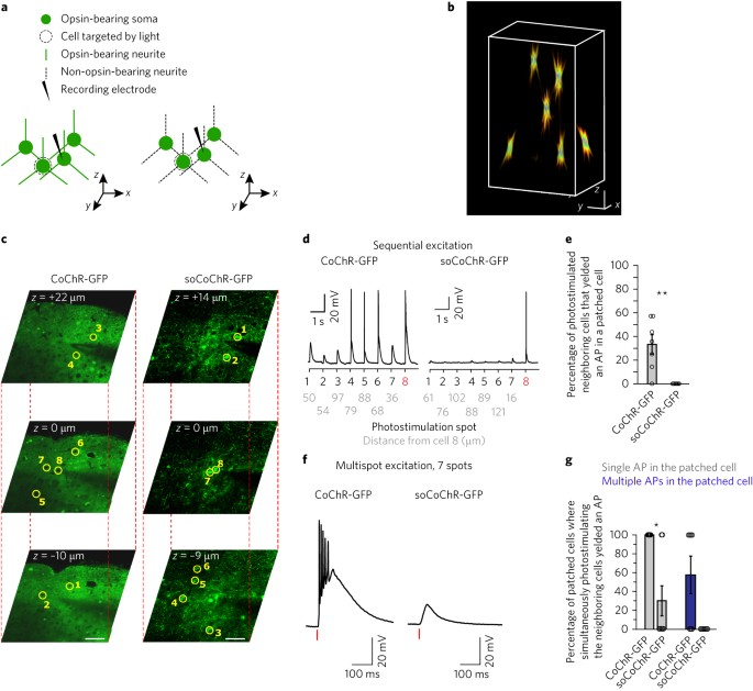 Temporally precise single-cell-resolution optogenetics | Nature
