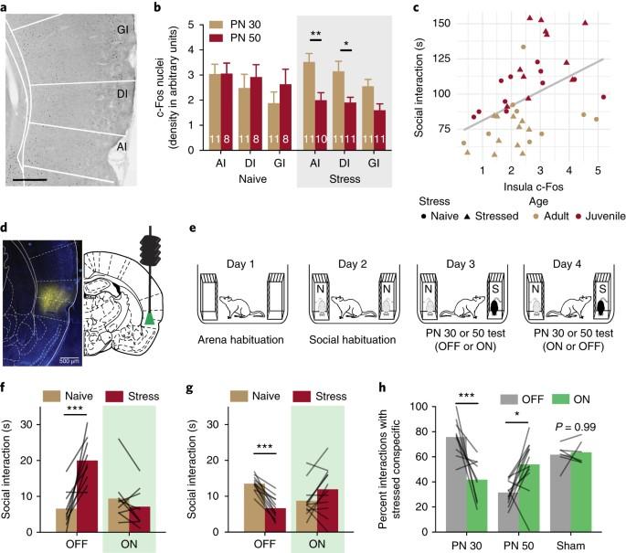 Insular cortex mediates approach and avoidance responses to social