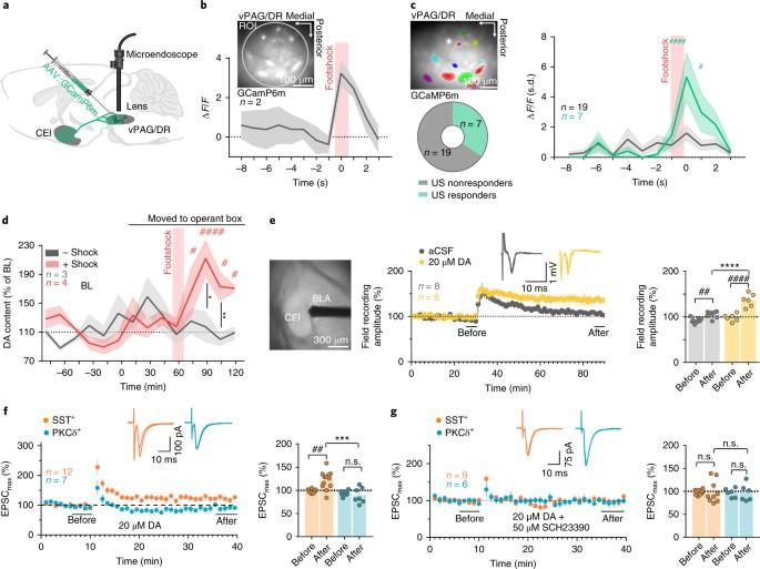 Dorsal tegmental dopamine neurons gate associative learning of fear