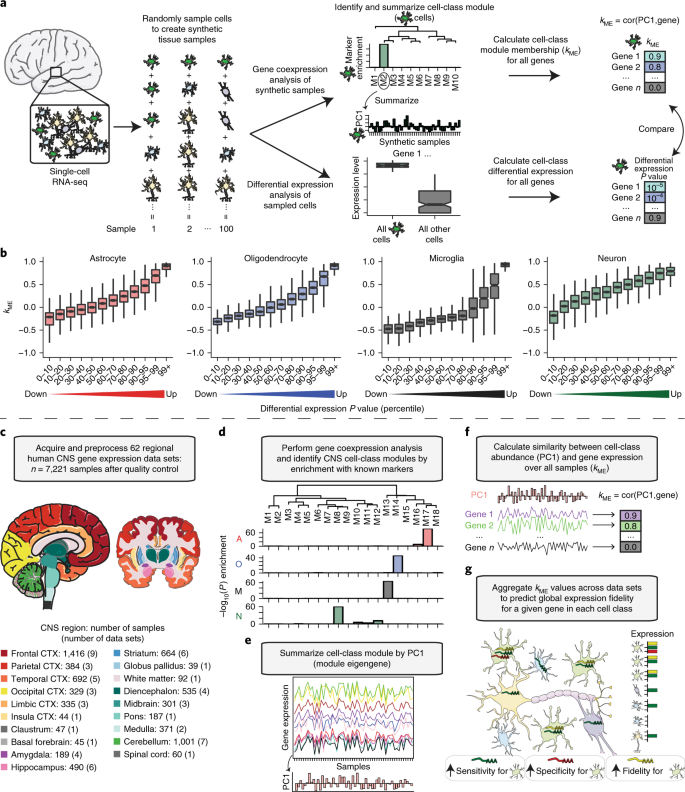 Variation Among Intact Tissue Samples Reveals The Core Transcriptional Features Of Human Cns Cell Classes Nature Neuroscience