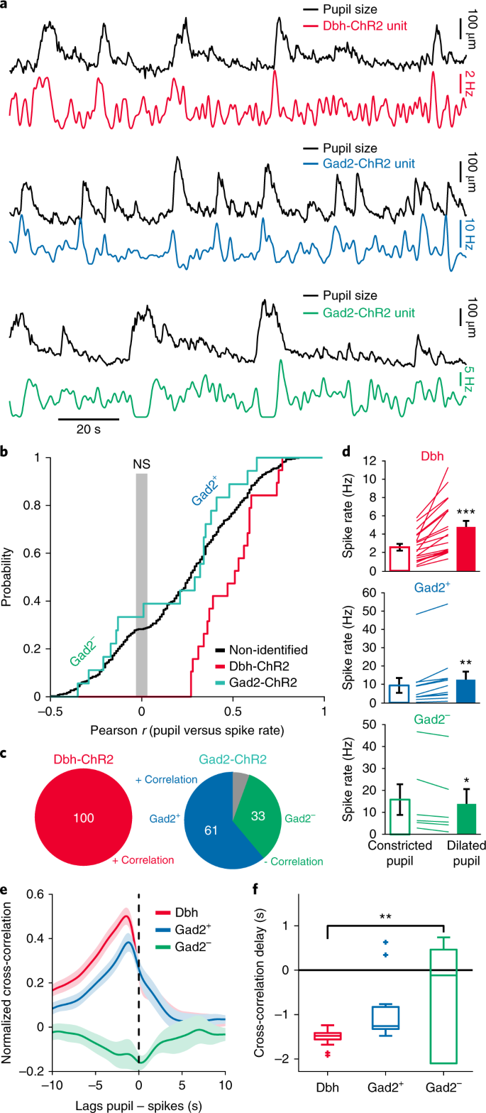 Active control of arousal by a locus coeruleus GABAergic