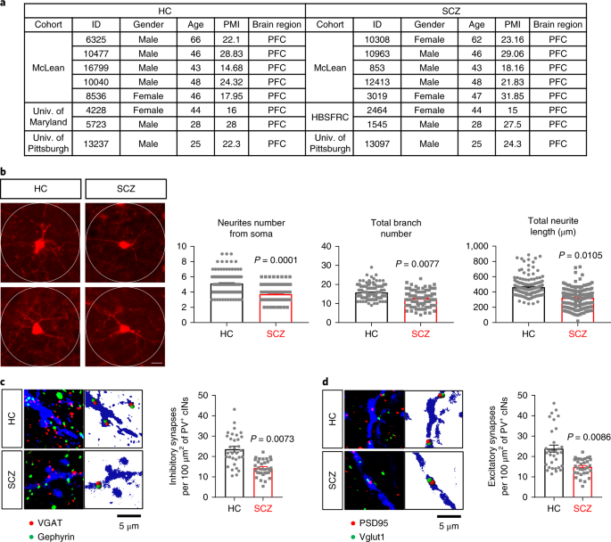 Dysregulated protocadherin-pathway activity as an intrinsic