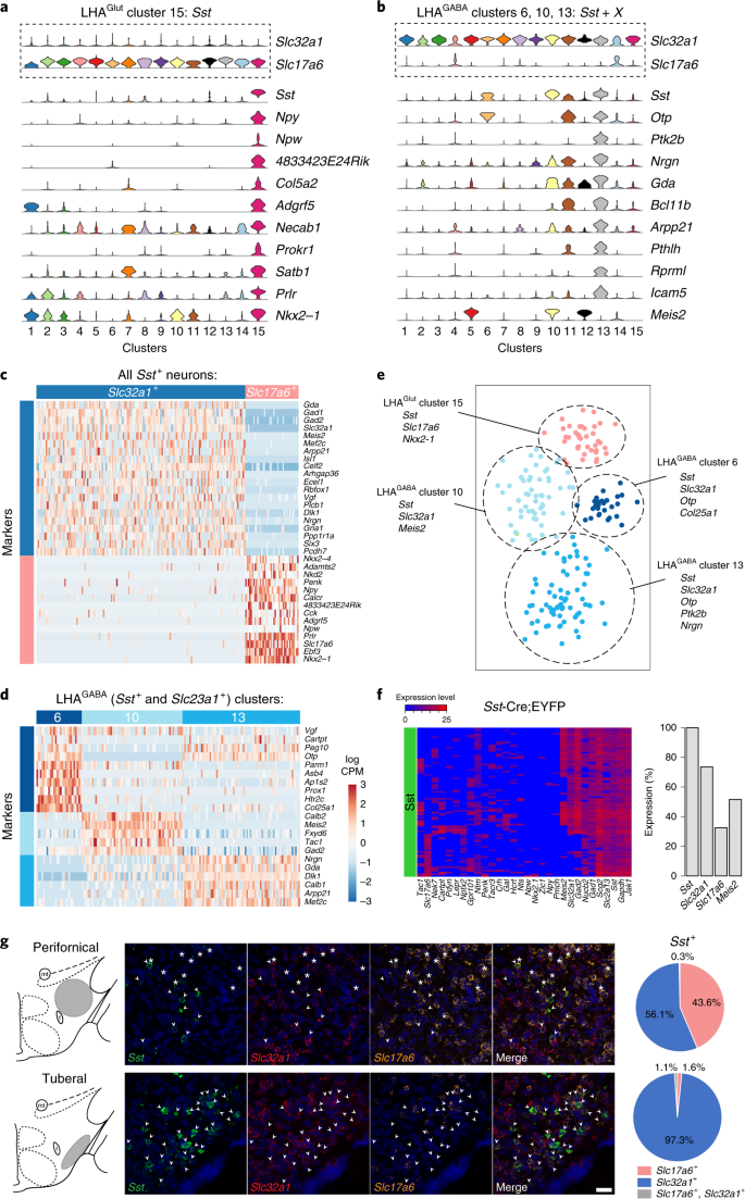 Single-cell transcriptomic analysis of the lateral hypothalamic area