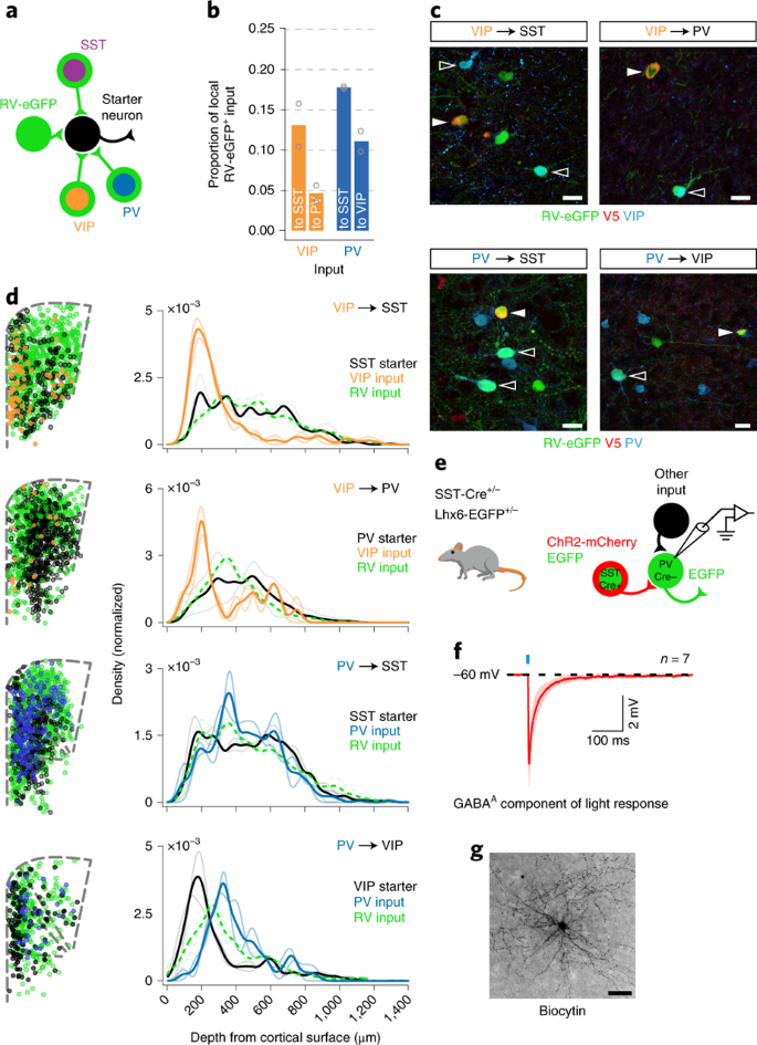 A whole-brain atlas of monosynaptic input targeting four