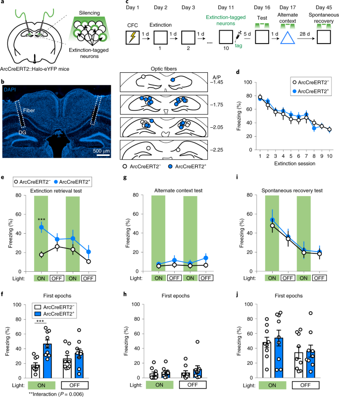 Distinct hippocampal engrams control extinction and relapse of fear