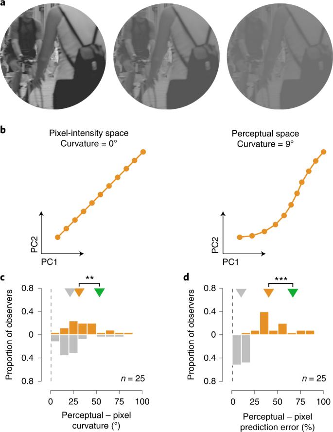 Perceptual straightening of natural videos | Nature Neuroscience