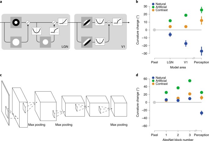 Perceptual straightening of natural videos | Nature Neuroscience
