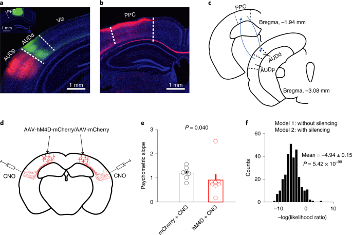 Causal contributions of parietal cortex to perceptual
