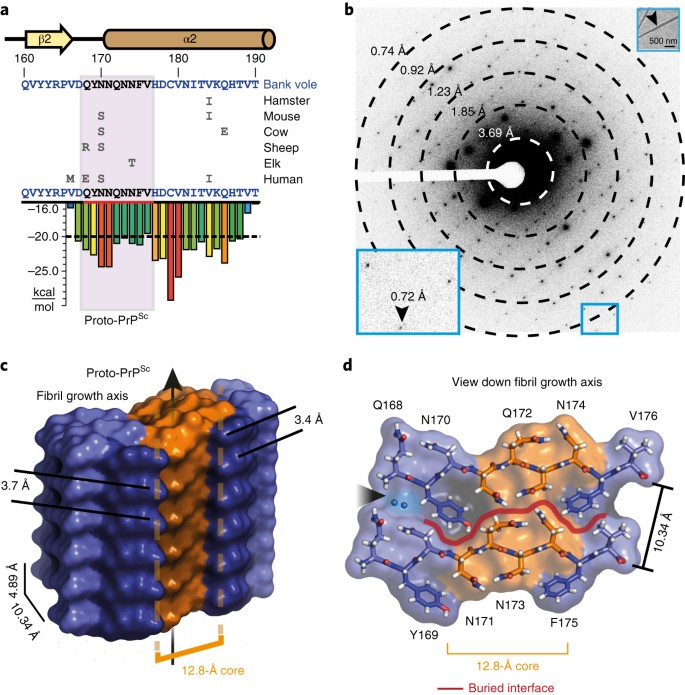 Sub-ångström cryo-EM structure of a prion protofibril reveals a