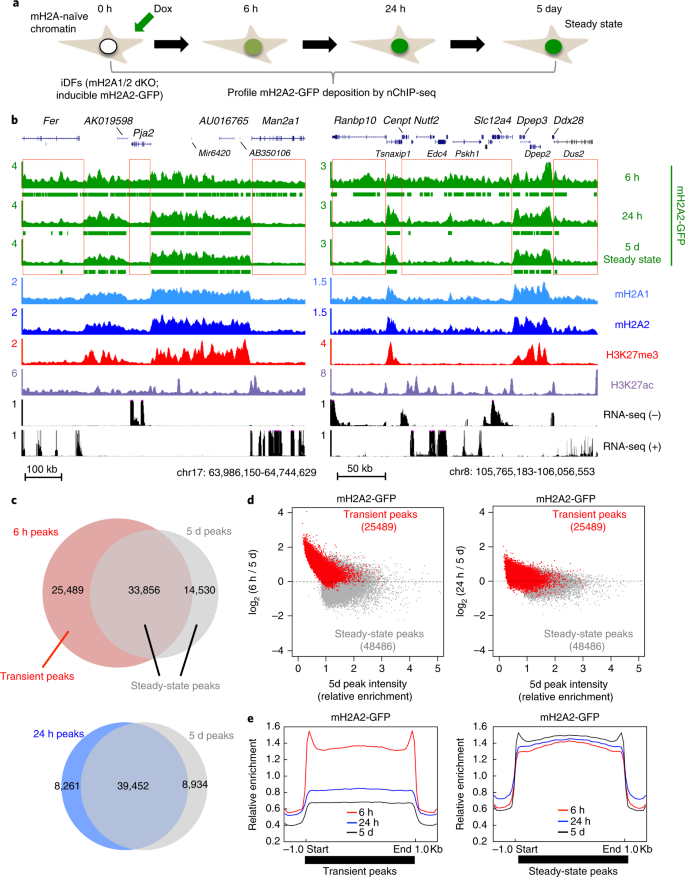 Transcription-associated histone pruning demarcates macroH2A