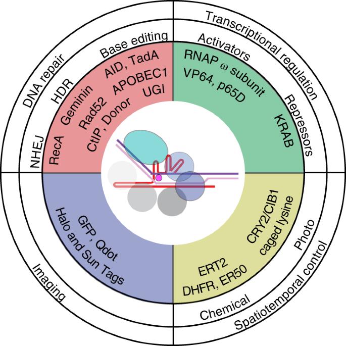 CRISPR RNA-guided autonomous delivery of Cas9 | Nature