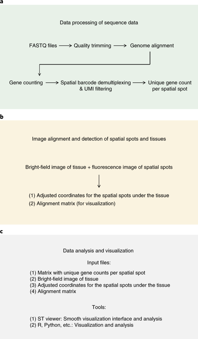 Barcoded solid-phase RNA capture for Spatial Transcriptomics