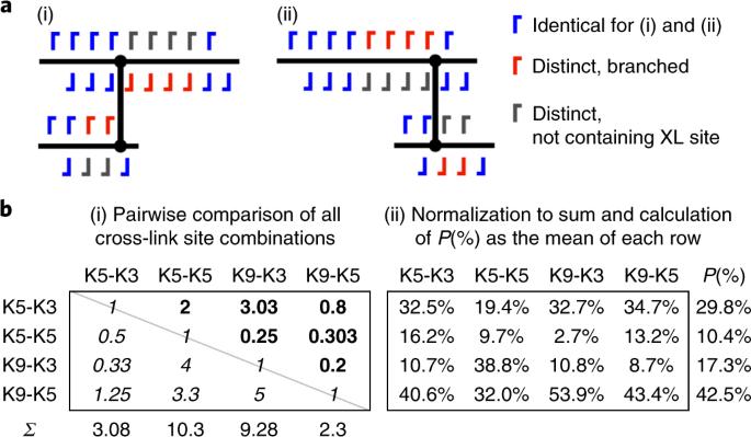 A cross-linking/mass spectrometry workflow based on MS