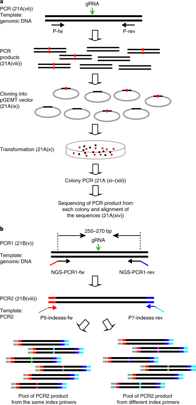 Application and optimization of CRISPR–Cas9-mediated genome