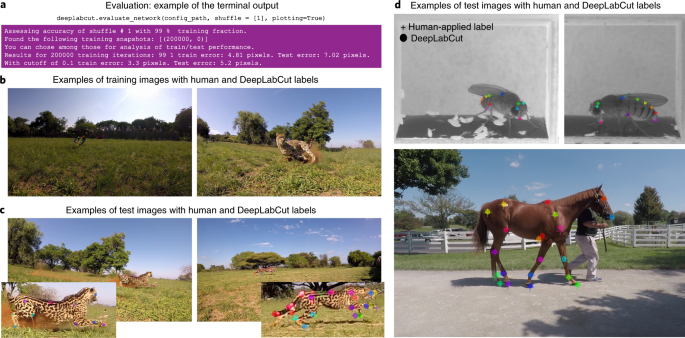 Using DeepLabCut for 3D markerless pose estimation across