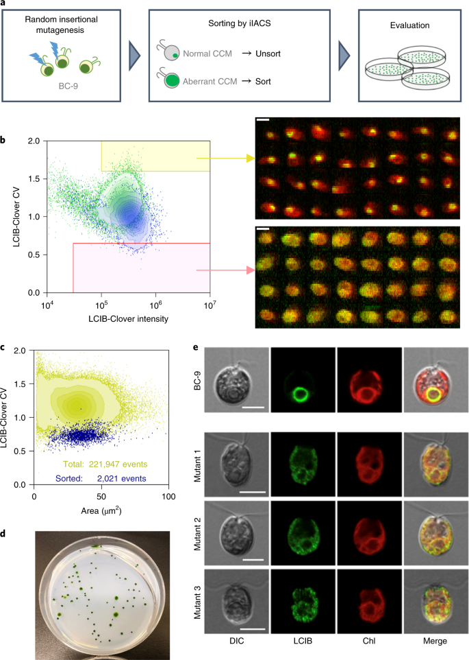 A practical guide to intelligent image-activated cell