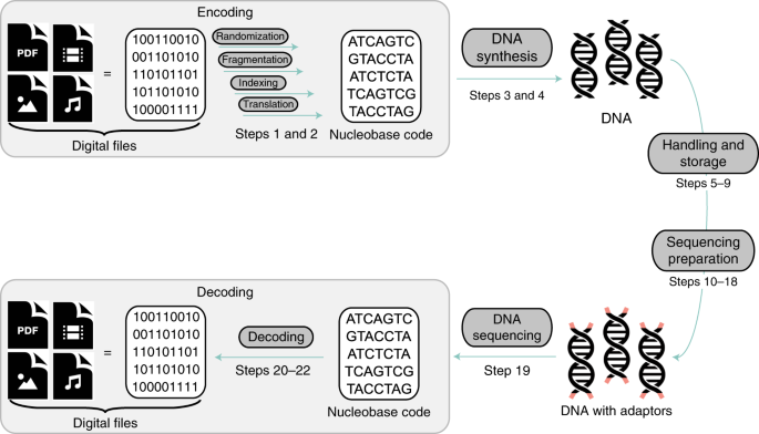 Reading And Writing Digital Data In Dna Nature Protocols