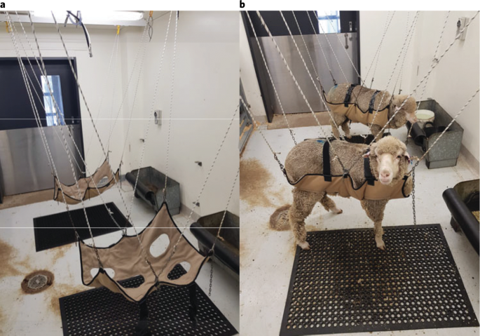 A Preclinical Large Animal Model For The Assessment Of Critical Size Load Bearing Bone Defect Reconstruction Nature Protocols