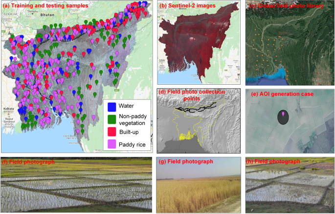 High resolution paddy rice maps in cloud-prone Bangladesh and