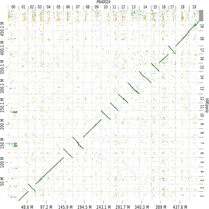 De novo phased assembly of the Vitis riparia grape genome