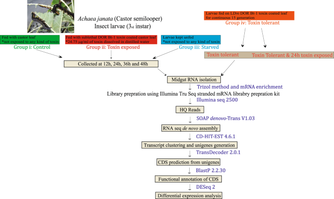RNA-Seq analysis and de novo transcriptome assembly of Cry toxin susce