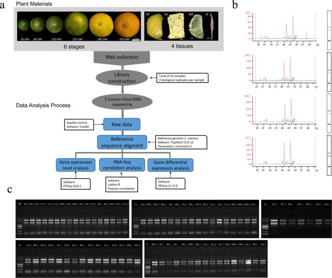 Global tissue-specific transcriptome analysis of Citrus sinensis fruit