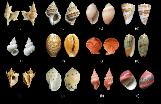 A shell dataset, for shell features extraction and recognition