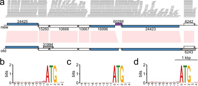 giardia genome size a rossz lehelet probléma