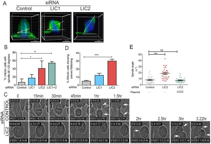 The Light Intermediate Chain 2 Subpopulation of Dynein Regulates