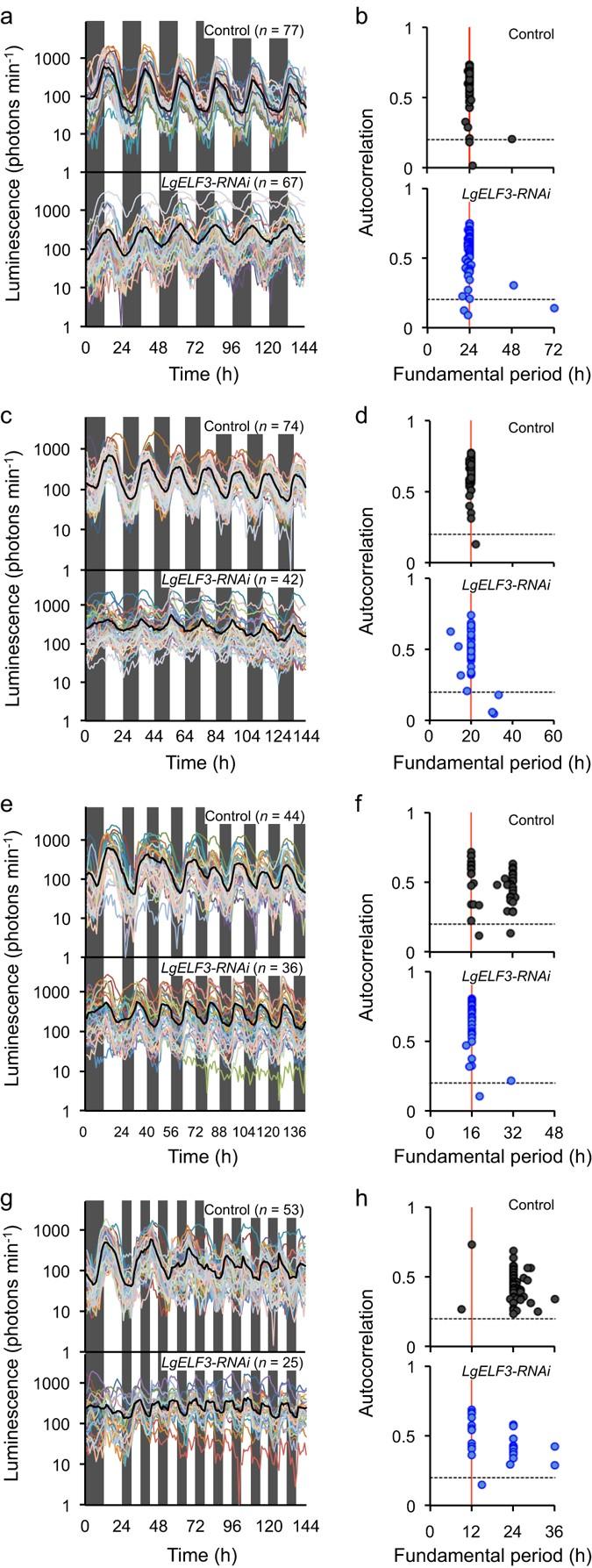 Synchrony of plant cellular circadian clocks with