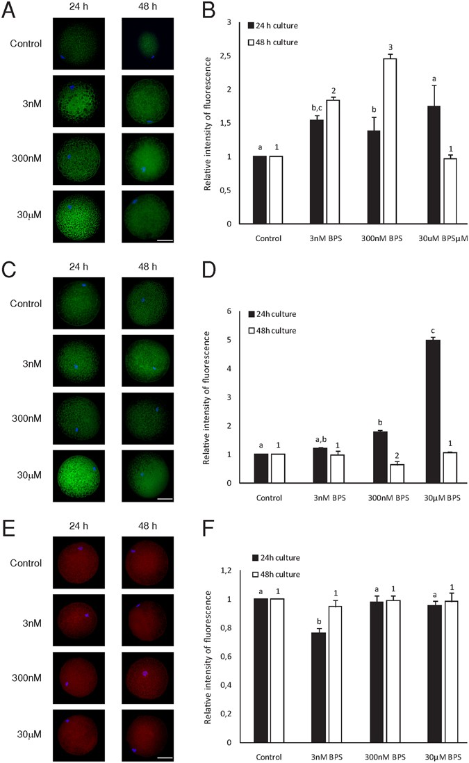 Bisphenol S negatively affects the meotic maturation of pig oocytes