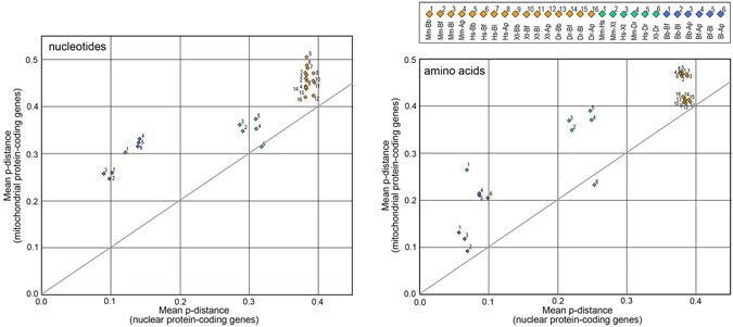 Evolutionary history of the extant amphioxus lineage with shallow