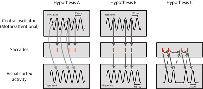 Temporal dynamics of saccades explained by a self-paced