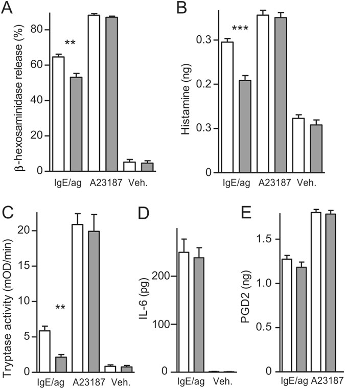 SLC10A4 regulates IgE-mediated mast cell degranulation in vitro and