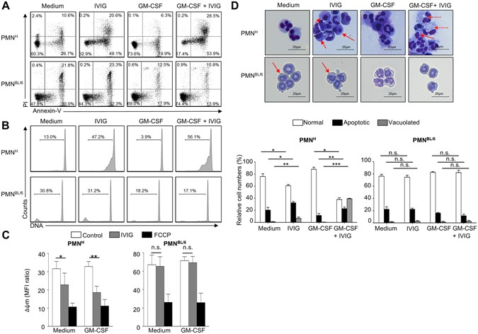 IVIG regulates the survival of human but not mouse