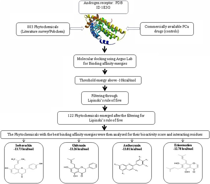 Structure Based Docking Studies Towards Exploring Potential Anti Androgen Activity Of Selected Phytochemicals Against Prostate Cancer Scientific Reports