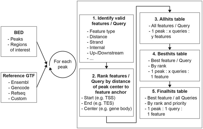 UROPA: a tool for Universal RObust Peak Annotation