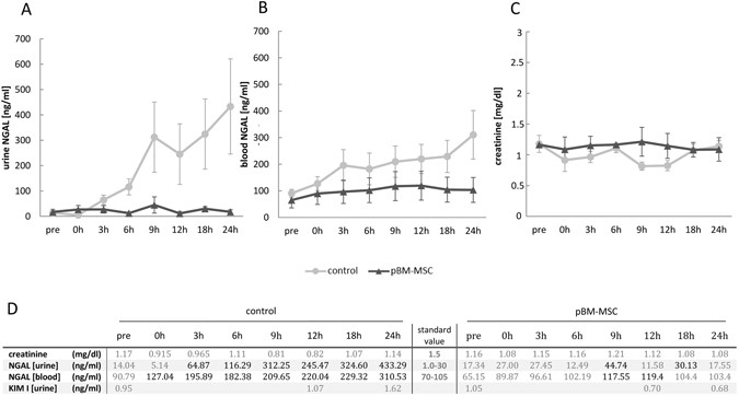 Mesenchymal stem cells correct haemodynamic dysfunction
