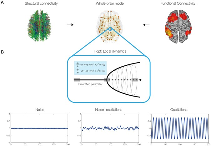 The dynamics of resting fluctuations in the brain