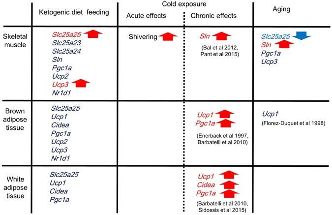 ketogenic diet and body temp