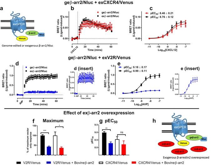 Using nanoBRET and CRISPR/Cas9 to monitor proximity to a genome