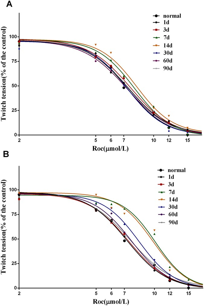 Differences in pharmacodynamic responses to rocuronium in
