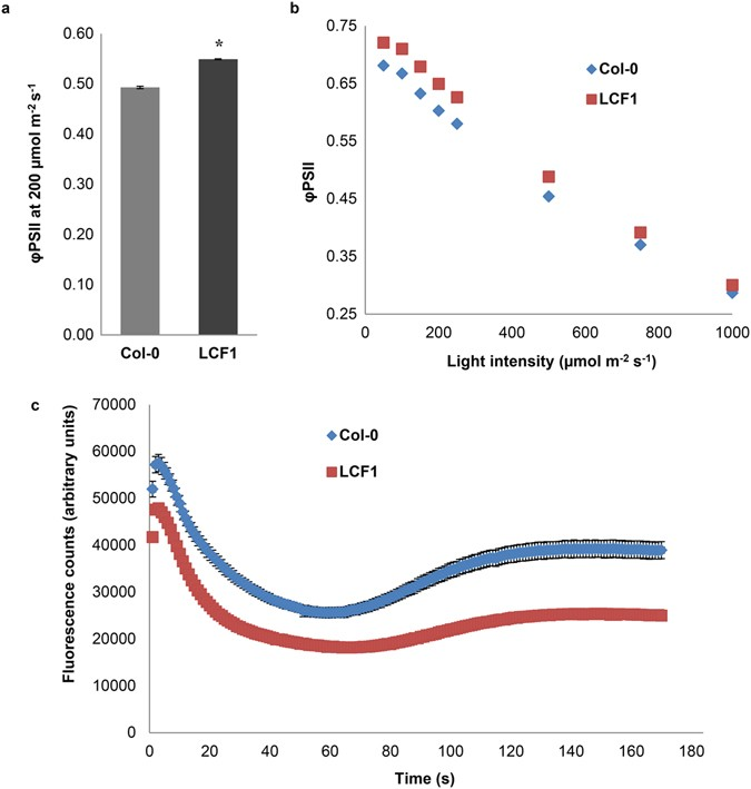 An Arabidopsis mutant with high operating efficiency of
