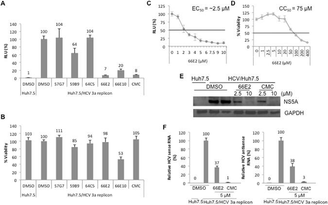 A screen for novel hepatitis C virus RdRp inhibitor